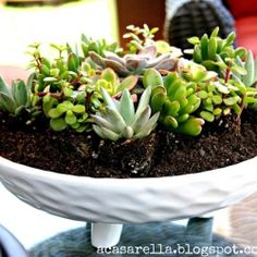 Think outside the flower pot when planting succulents.  This one resides in a decorative bowl.