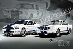 Shelby GT500 old & new