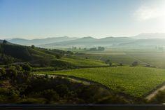 Casablanca Vine Valley, Chile