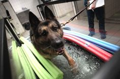 Dog Center Europe treats soldiers — the canine kind — injured in war - News - Stripes