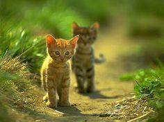 Little adventurers!