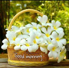 Good Morning Gift, Good Morning Thursday, Morning Morning, Good Morning Picture, Good Morning Greetings, Good Morning Quotes, Morning Post, Good Morning Flowers Pictures, Good Morning Beautiful Pictures