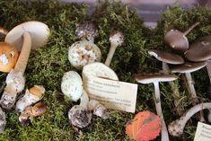 Kollane kärbseseen - Veeseire Dryad's Saddle, Stuffed Mushrooms, Dinner, Vegetables, 11 August, Food, Water, Stuff Mushrooms, Dining