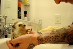 Cutest. Hedgehog. Gif. EVER. Click pic to see :')