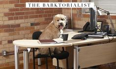 Executive Administrative Assistant Appreciation Day ... Secretary's Day ... Hump Day ... Take Your Dog to Work Day ... Love #Dogs Love #Fashion TheBARKTORIALIST.com