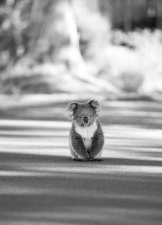 Friday Haiku Too: Eternally Fuzzy
