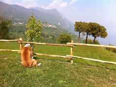 Romeo looks at the lake #garda from Villa #Sostaga - #hotelvillasostaga in #Gargnano