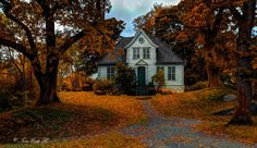 Autumn at Gamle Bergen - null