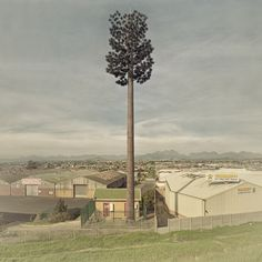 """""""Invasive Species,"""" Dillon Marsh, photographer.  Cell towers disguised as trees."""
