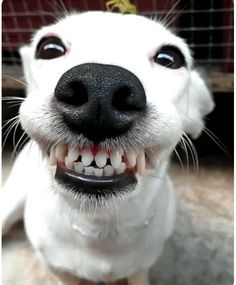 It's a smiling dog!  Kinda,scary, but a smile nevertheless.