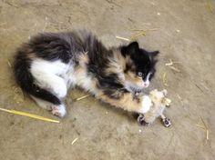 Playing cat - http://cutecatshq.com/cats/playing-cat/