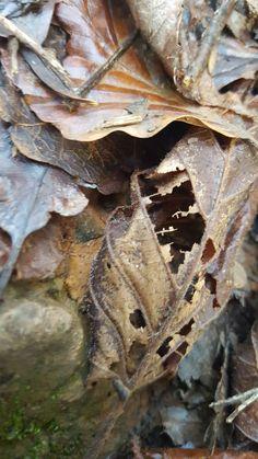 Skeleton leaves.