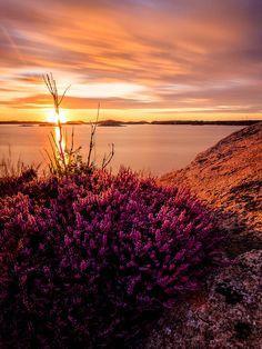 Bohuslän Coast, Sweden (photo by Patric Bergkvist, Lysekil, Västra Götaland, Sweden)....