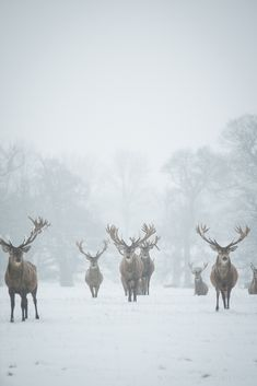 Red Deer - The Boys Are Back In Town | Flickr - Photo Sharing!