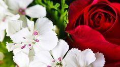 Best Flowers Wallpaper Lovely Colorful Flowers Flowers