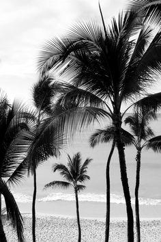 black and white + photography + palm trees + tropical plants + nature + garden Tumblr Beach Photos, Beach Tumblr, Photos Bff, Baby Photos, Design Pop Art, Paradis Tropical, Wallpapers Tumblr, Photo Vintage, Waikiki Beach