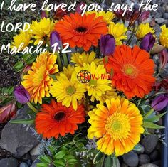INSPIRATION: *YOU ARE LOVED*  I have loved you, saith the LORD. Yet ye say, Wherein hast thou loved us? Was not Esau Jacob's brother? saith the LORD: yet I loved Jacob, (Malachi 1:2)  God has loved you. He first loved us, the sinners even before we knew Him.  You may not be special. You may not be acceptable. You may be the least. You may be the worst. You may be neglected. But Jesus loves you more than others. You are loved, cared and blessed. Have a wonderful day (VJR.Roy)