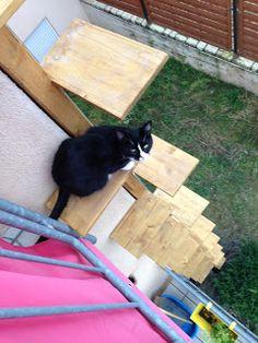 Projekt Katzenleiter