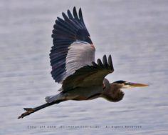 birds Photographs - Google Search