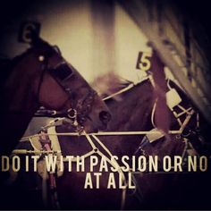 Passionate about harness racing