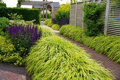ogród trawy ozdobne hakonechloa szałwia omszona