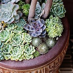 Under-plant with succulents - Container Designs with Succulent Plants - Sunset