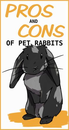 The Pros and Cons of Having Rabbits as House Pets - Rabbits are great companion pets, but they're not for everyone. Here are some pros and cons of ha - Mini Lop Bunnies, Pet Bunny Rabbits, Pet Rabbit, Cute Bunny, Lionhead Bunnies, Silly Rabbit, Bunny Bunny, Rabbit Facts, Classroom Pets