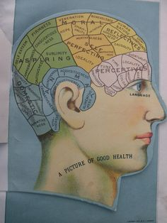 1916 overlay color MEDICAL CHARTS from antique medical book - head, brain, skull. $19.95, via Etsy.
