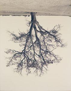 Canadian artist Rodney Graham. Wow!