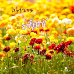 April is here!! Start the month by organizing your next vacation!!  ps. Attention!! Don't get fooled today!!  www.rodos-palace.com