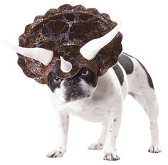 Bring it on!! (Animal Planet Triceratops Dog Costume :: perfect Halloween costume for a small dog, head gear with 3 horns)