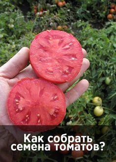 ogorod.ru