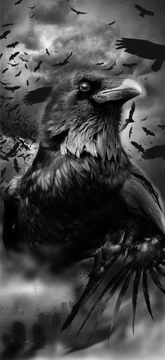 Ravens and crows, black and white art