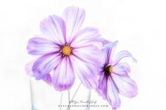 Quelques fleurs pour terminer la saison ! Celles-ci sont sur mon disque dur depuis plusieurs semaines et sont les dernières photos prises cet automne !