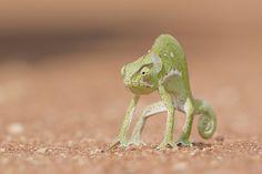 Chameleon - Online Relaxing : Online Relaxing