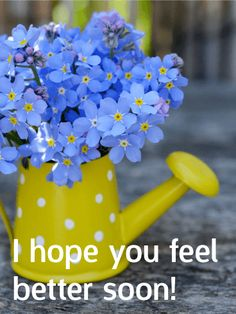 Blue Flower Get Well Card: Precious Blue Flowers Make Everyone Feel Better!  Nothing Makes