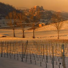 Castellinaldo, Piemonte, sunset over the winter vineyards in the Roero wine zone of Italy http://www.winepassitaly.it/index.php/en/travel-wineries-piedmont/maps-and-wine-zones/roero/itinerary/castles-high-and-low#!prettyPhoto