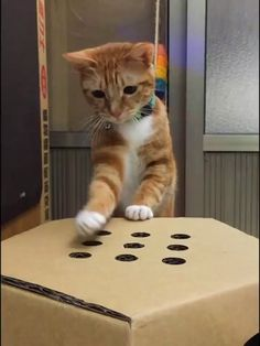 I love cat gifs and dog gifs. Funny Cats, Cute Cats, all the time.Big animals gif lover too. Funny Animal Videos, Funny Animal Pictures, Cute Funny Animals, Cute Baby Animals, Animals And Pets, Cute Cats, Funny Cats, Videos Funny, Diy Funny