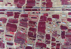 Peperoncini rossi appena raccolti e stesi a essiccare al sole, nella provincia cinese dello Xinjiang. (China daily/Reuters/Contrasto).