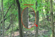 Unexplained Fairy Sighting? Real photo here and read about my investigation http://fairywillowlane.blogspot.com/2016/05/fairy-investigation-2-fairy-hill.html?spref=pi