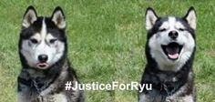 petition: #JusticeforRyu Find and Prosecute the Deranged Individual that Committed this Crime