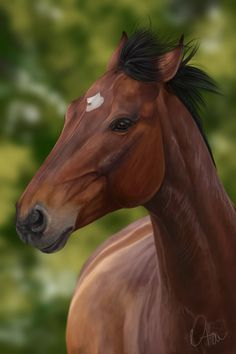 Paris by Naia-Art Star Stable Horses, Horse Star, Most Beautiful Horses, Pretty Horses, Horse Drawings, Animal Drawings, Horse Animation, Indian Horses, Horse Sketch