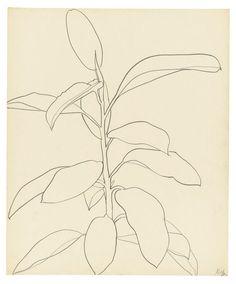 Ellsworth Kelly's Last Works Flower Line Drawings, Art Drawings, Matisse, Sharpie Art, Sharpie Doodles, Sharpie Projects, Ellsworth Kelly, Plant Drawing, Illusion Art