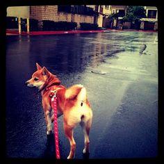 she hates the rain