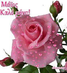 Μάϊος: Εικόνες για καλημέρα-καλό μήνα-καλή πρωτομαγιά - eikones top Rose, Plants, Pink, Flowers, Plant, Roses, Pink Hair, Planets