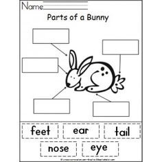 Parts of a Bunny Activity
