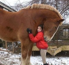 Huge Horse - Insanely Huge Animals Caught on Film - Photos