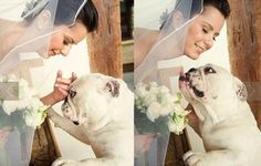 ♥ Bully & Bride ♥ Photos from the web site >> http://yeswedding.uol.com.br/pt/acontece/dog-kiss/