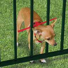 One way to keep your dog in the yard! i need one! we have this great grass area with this sort of fence and it's next to the road and i'm too afraid to let her play!