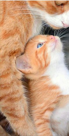 Animals And Pets, Baby Animals, Funny Animals, Cute Animals, Cute Cats Photos, Cute Animal Pictures, Cute Baby Cats, Kittens Cutest, Cute Creatures